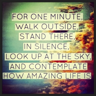 contemplate how amazing life is